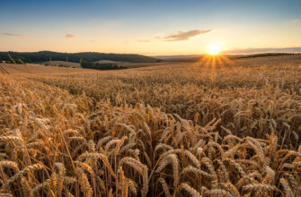 Снижение запасов пшеницы во всем мире